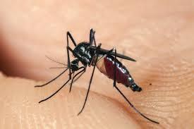 Dịch vụ phun muỗi an toàn, giá rẻ tại Cầu Giấy