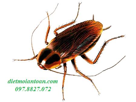 Dịch vụ diệt côn trùng - Gián Đức hiệu quả, tận  gốc tại Từ Liêm - Hà Nội
