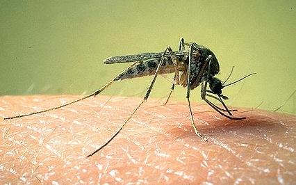 Thuốc phun muỗi có thực sự độc hại với con người?
