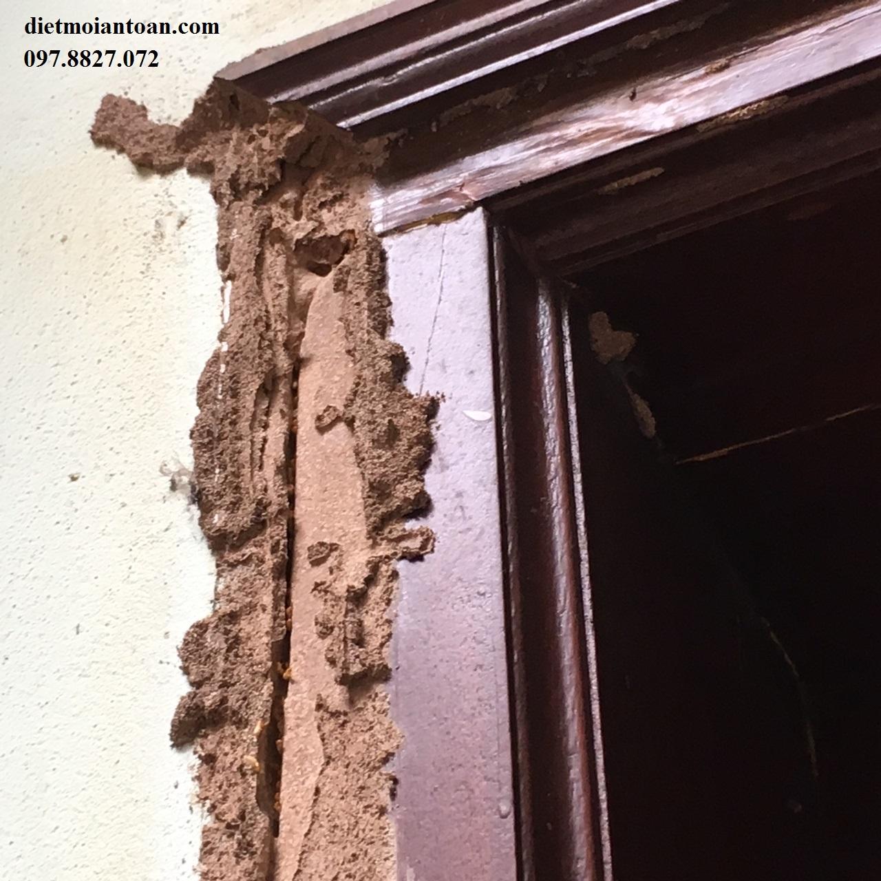 Phòng chống mối trong khi xây nhà là việc làm khẩn cấp trước khi quá muộn