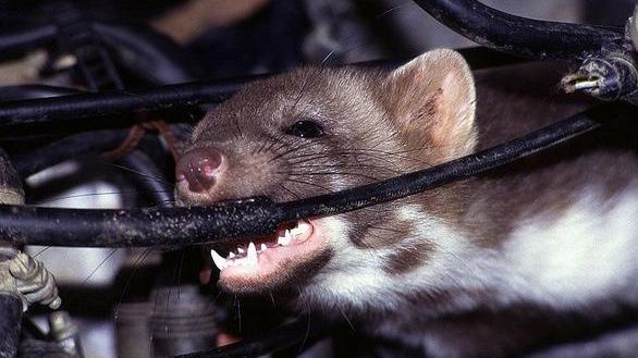 Dịch vụ diệt chuột hiệu quả hiện đại nhất tại Linh Đàm