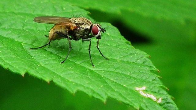 Diệt ruồi an toàn, tận gốc quả cao tại Nhà Hàng