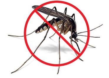Phun muỗi thế nào cho hiệu quả - Không phải ai cũng biết