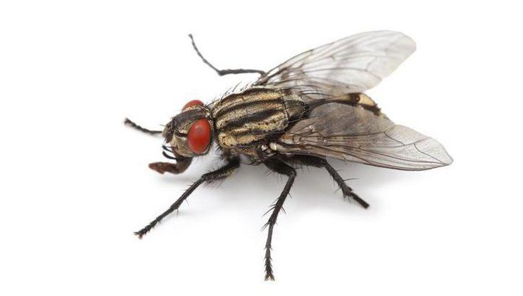 Dịch vụ diệt ruồi hiệu quả, tận gốc tại Quận Hà Đông