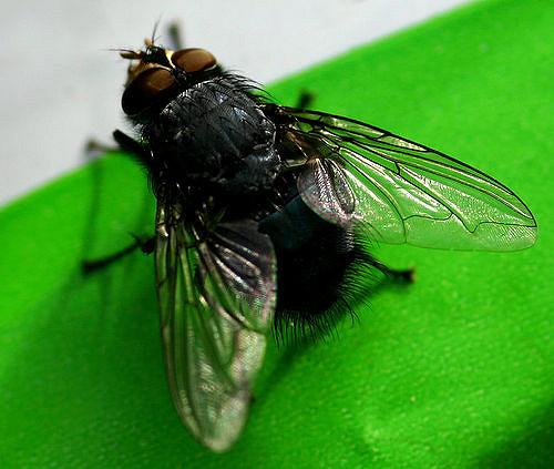 Dịch vụ diệt ruồi uy tín, giá rẻ tại Linh Đàm