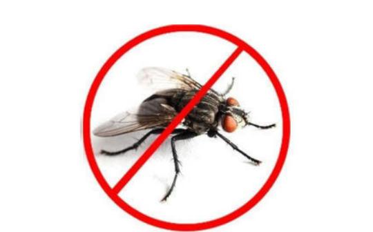 Dịch vụ diệt ruồi  Nhà Hàng giá rẻ tại Hà Nội