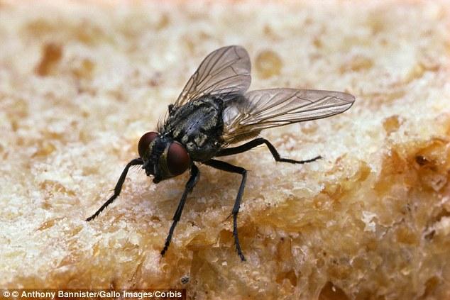 Báo giá dịch vụ diệt ruồi Hà Nội - Diệt trừ ruồi tận gốc, trọn gói